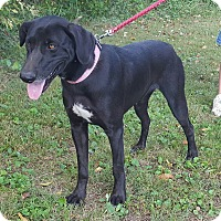 Adopt A Pet :: Molly - Somonauk, IL