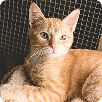 Adopt A Pet :: Chester - Leander, TX