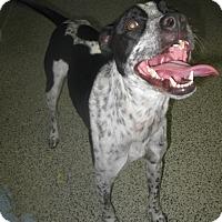Adopt A Pet :: Marley - Hayden, ID