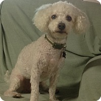 Adopt A Pet :: Jet - Flossmoor, IL
