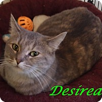 Adopt A Pet :: Desirea - Chisholm, MN