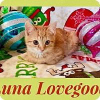 Adopt A Pet :: Luna Lovegood - Newport, KY