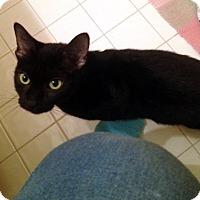 Adopt A Pet :: Margo - Fowlerville, MI