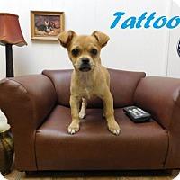 Adopt A Pet :: Tattoo - Arcadia, FL