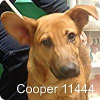 Adopt A Pet :: Cooper - Alexandria, VA