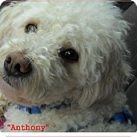 Adopt A Pet :: Anthony(in adoption process) - El Cajon, CA