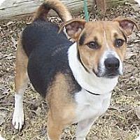 Adopt A Pet :: Spanky - Oberlin, OH