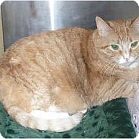 Adopt A Pet :: P-Jayz - Colmar, PA
