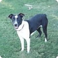 Adopt A Pet :: lizzie - Phelan, CA