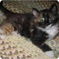 Adopt A Pet :: Henrietta - Davis, CA