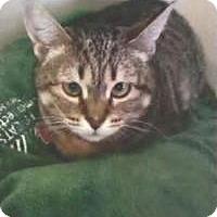 Adopt A Pet :: Sweetie - Coral Springs, FL