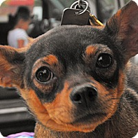 Adopt A Pet :: Blue (JR) - Santa Ana, CA