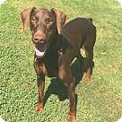 Adopt A Pet :: Resa