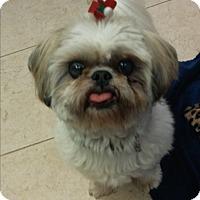 Adopt A Pet :: Karleigh - Boca Raton, FL