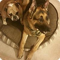 Adopt A Pet :: Max - Keyport, NJ