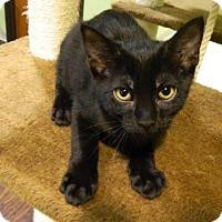Adopt A Pet :: Tony - The Colony, TX