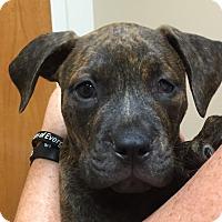Adopt A Pet :: Kobe - Ft. Lauderdale, FL