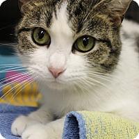 Adopt A Pet :: Spotsy - Medina, OH