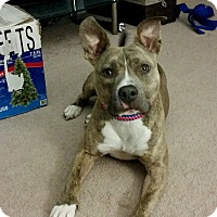 Adopt A Pet :: Oakley - Richmond, VA