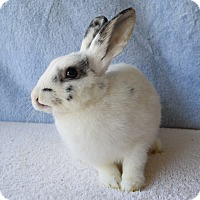 Adopt A Pet :: Ted - Fountain Valley, CA