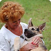 Adopt A Pet :: Max AD 09-10-16 - Preston, CT
