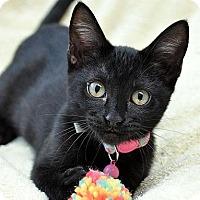 Adopt A Pet :: Cinder - Fort Leavenworth, KS