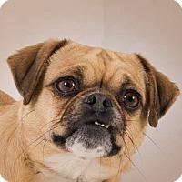 Adopt A Pet :: Disco - Prescott, AZ