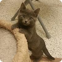 Adopt A Pet :: Eenie - Phoenix, AZ