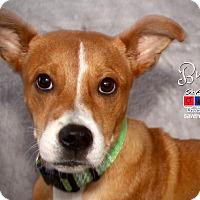 Adopt A Pet :: Bunny - boston, MA