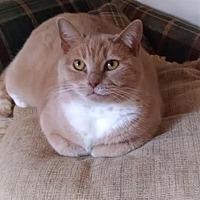 Adopt A Pet :: Malcolm - Lambertville, NJ