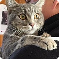 Adopt A Pet :: JELLY BEAN - San Pablo, CA