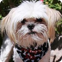 Adopt A Pet :: Mowgli - Gilbert, AZ