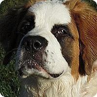 Adopt A Pet :: BANDIT - Glendale, AZ