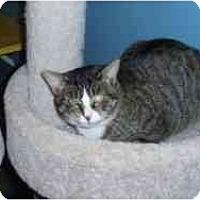 Adopt A Pet :: Elaine Hoffman - Hamburg, NY