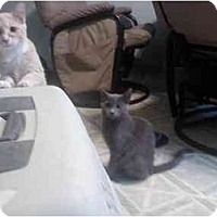 Adopt A Pet :: Tolstoy - Washington Terrace, UT