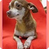Adopt A Pet :: Ladybug - Staunton, VA