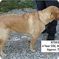 Adopt A Pet :: I.D. # 750-08 - RESCUED! - Zanesville, OH