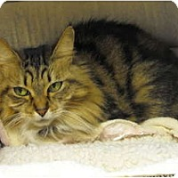 Adopt A Pet :: Chanel - Mission, BC