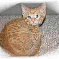 Adopt A Pet :: Shawn - Montgomery, IL