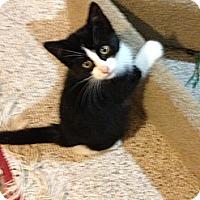 Adopt A Pet :: Fugi - Pittstown, NJ