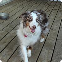 Adopt A Pet :: Kodi - Elk River, MN
