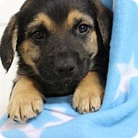 Adopt A Pet :: Ralph - Brattleboro, VT