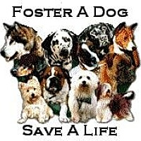 Adopt A Pet :: Foster 4 Us/ Volunteer. - Chino, CA