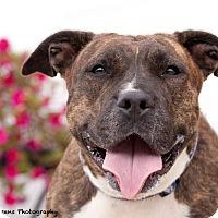 Adopt A Pet :: Raisin - Long Beach, NY