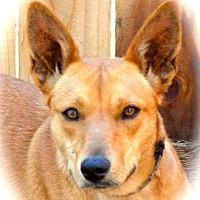 Adopt A Pet :: Reba - Blanchard, OK