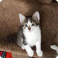 Adopt A Pet :: Shasta - Duluth, GA