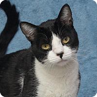 Adopt A Pet :: Lenny - Elmwood Park, NJ