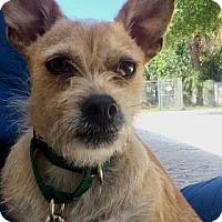 Adopt A Pet :: Lena - Bradenton, FL