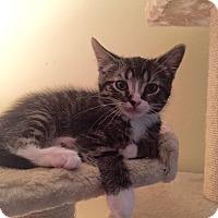 Adopt A Pet :: Axl - Richmond, VA