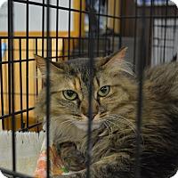 Adopt A Pet :: Highness - Ogden, UT